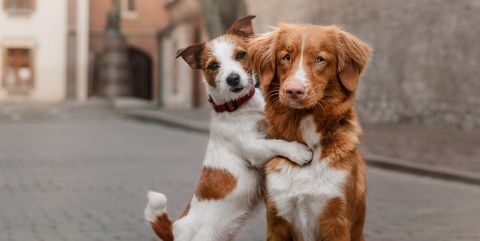 two-dogs-in-the-city-royalty-free-image-627966690-1557478712.jpg